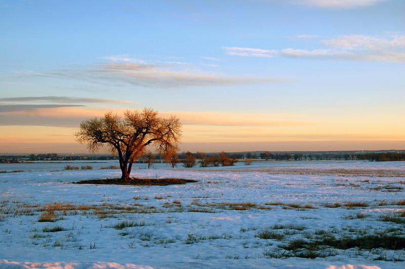 Sunrise Tree.jpg