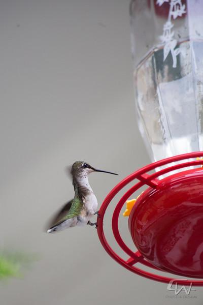 Hummingbird-1934.jpg