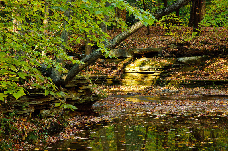 20081023_south_chagrin_reservation_037.jpg