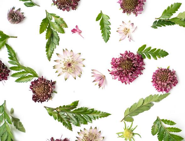 Burgundy Flower Art