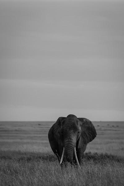 Tanzania_Feb_2018-1130.jpg