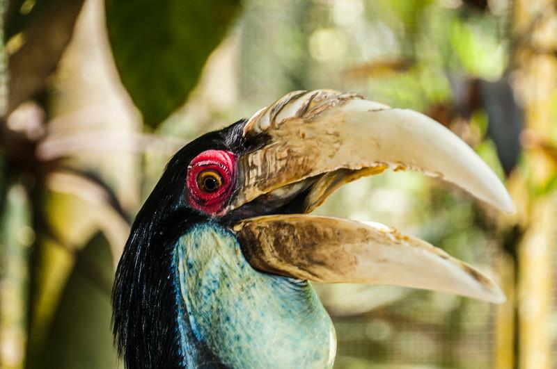 Bali Birds-3.jpg