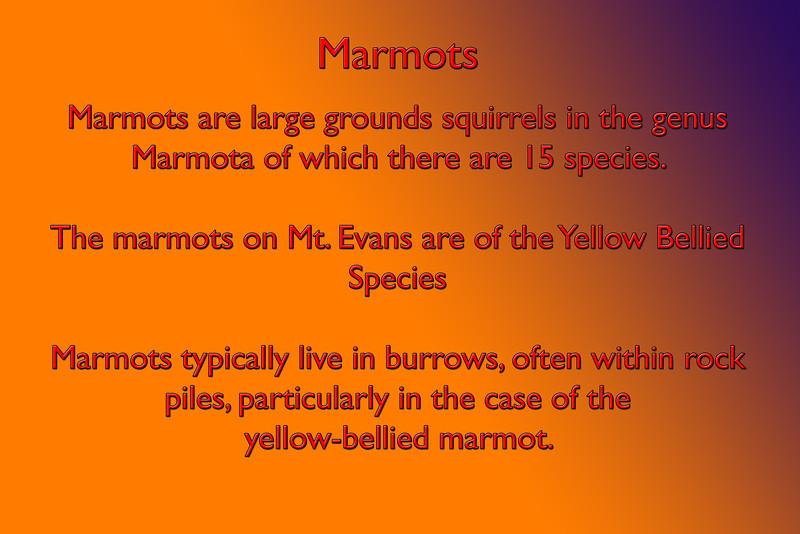 Marmots,type.jpg
