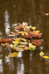 Lanana Creek010