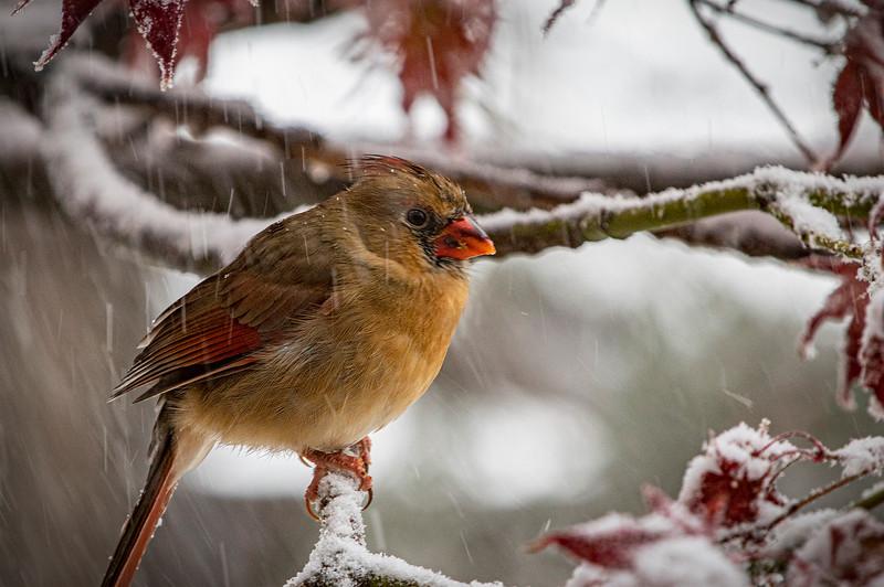 11-19-Cardinal_01.jpg
