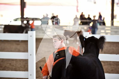 Bill Dorough Memorial Cattle Show
