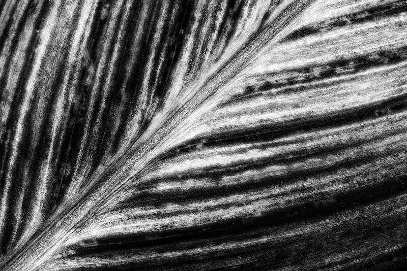 canna-leaf-4.jpg