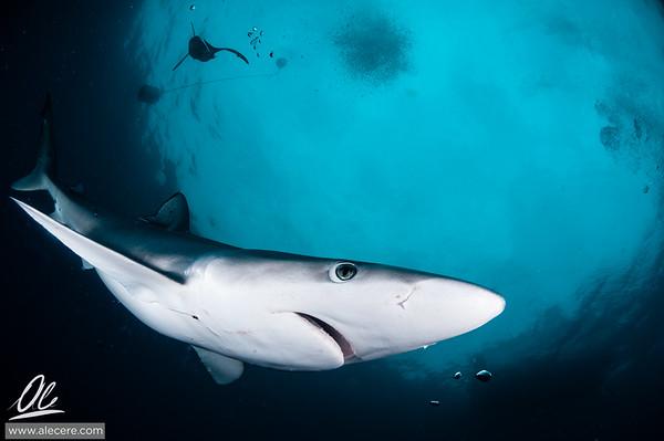 Cape Town Underwater