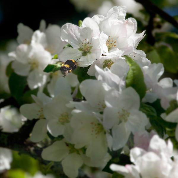 Dag_044_2012-maj-25_6656.jpg