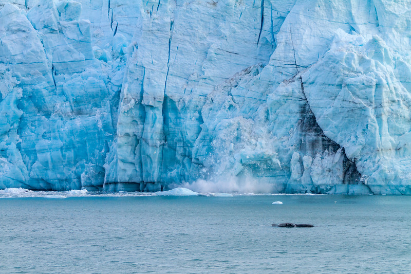 A calving tidal glacier with huge chunks of ice falling off due, I'm sure, to global warming. Maybe.
