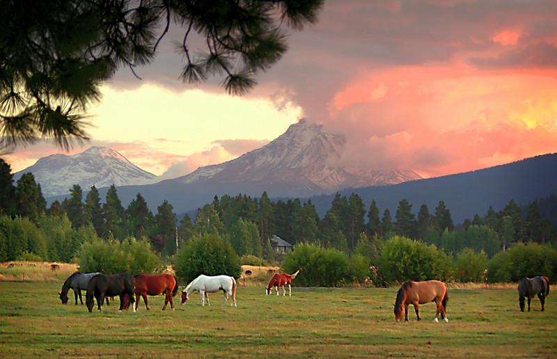 horses sunset 11x17 300dpi  091305MASTER 062806_8313 copy.jpg