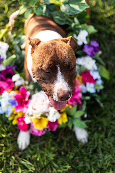 Daisy4-20-2066.jpg
