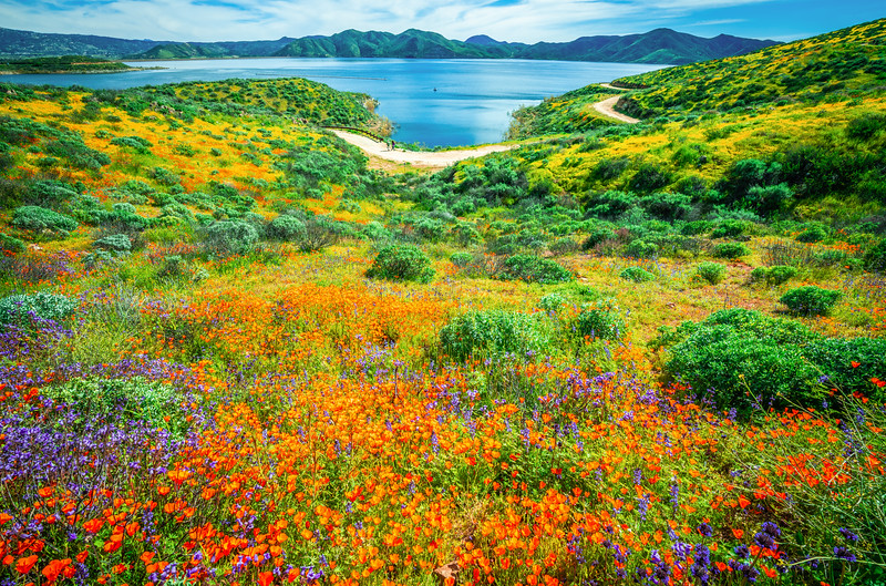 California Spring Wildflower Superbloom Symphony #4: Diamond Valley Lake Wildflower Trail Superbloom!   California Poppy Wild Flower Super Bloom Fine Art Landscape Nature Photography!  Elliot McGucken Fine Art Prints & Luxury Wall Art