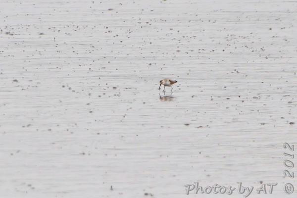 2012-09-02 Riverlands Migratory Bird Sanctuary