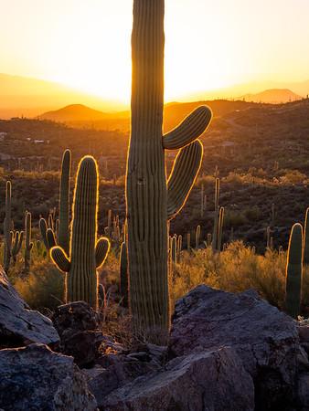 Saguaro National Park - updated 10/27/2018