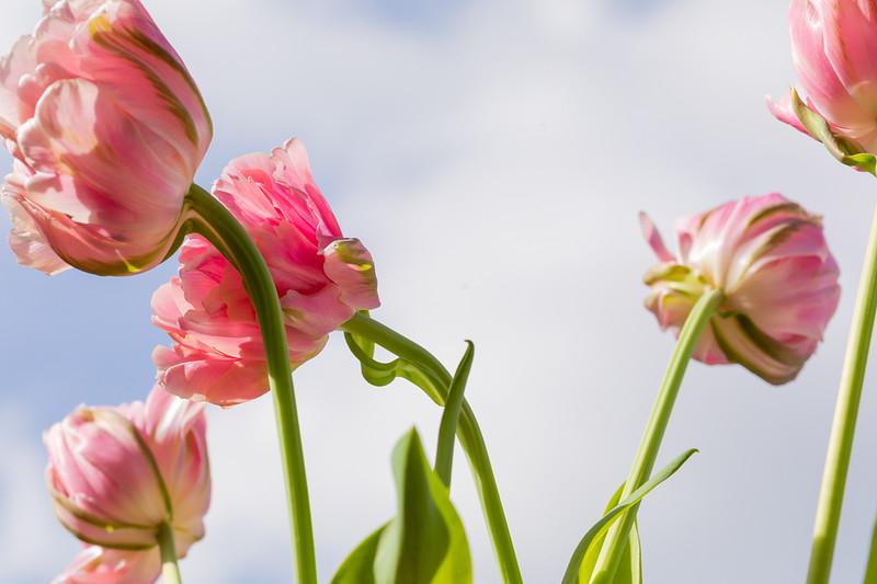 FineArt_Flowers_051520_0616.jpg