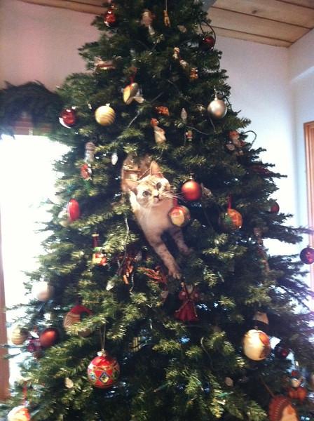 Bella in tree.JPG