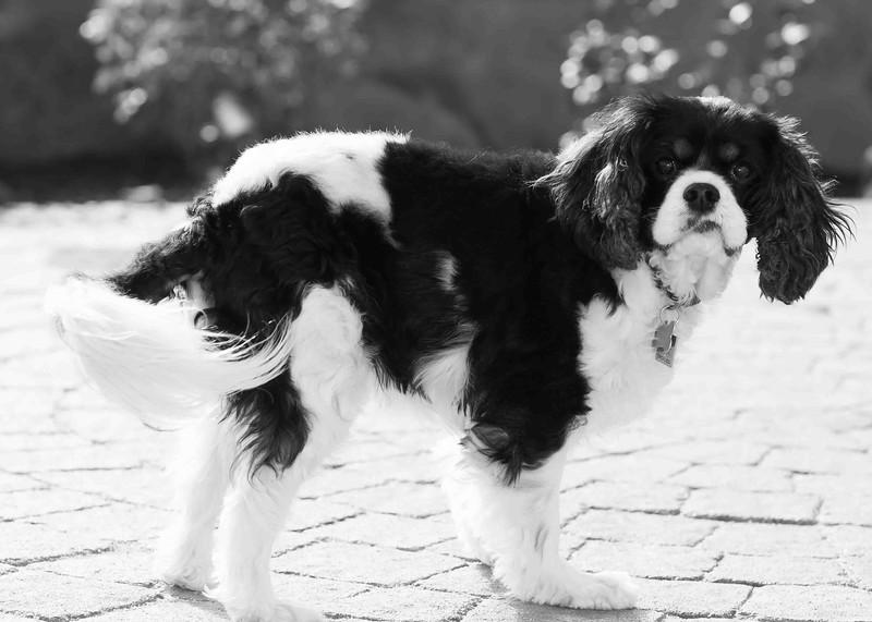 Clifton_Dogs_0070.jpg