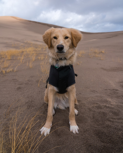 Hiking Dog in Sand Dunes