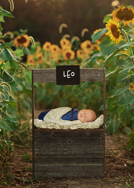 Welcome, Baby Leo!