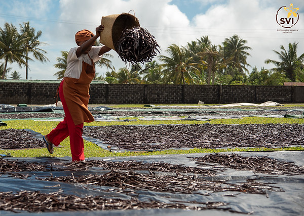 SVI - Stories from the Vanilla Lands Pt. 1 - A Day of Vanilla Drying and Fermenting at ProMaBio