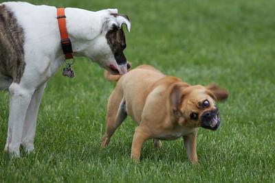 2011-05-28 Frankenmuth Dog Park