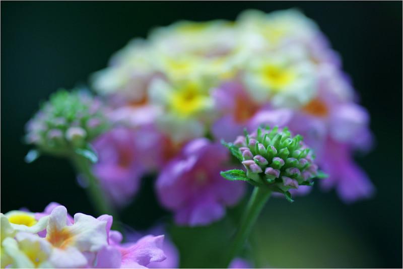 Flower_1_032610_040210.jpg