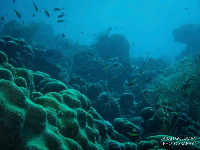 Bonaire-photography (1).jpg