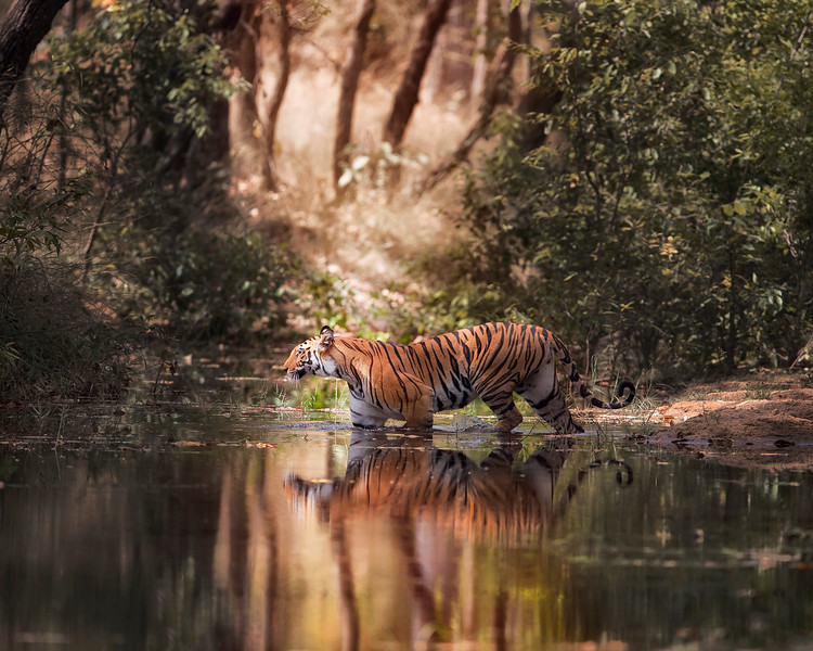"<b>Photo tour to INDIA (late April-early May)</b><br> <b>Tour itinerary: </b><a href=""http://www.kencongerphotography.com/Other/India-Tiger-Photo-Tour/31818763_rskBH2"">INDIA TIGER PHOTO TOUR</a><br> India 2019 tour is FULL."