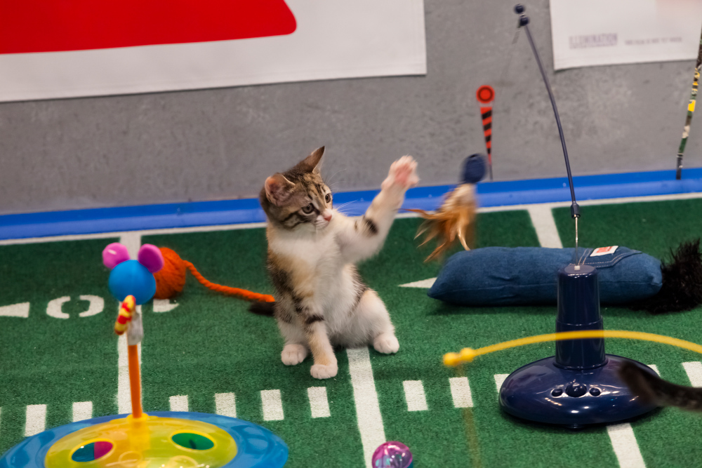 Description of . Kitty half time show during Puppy Bowl IX(Photo credit: Animal Planet)