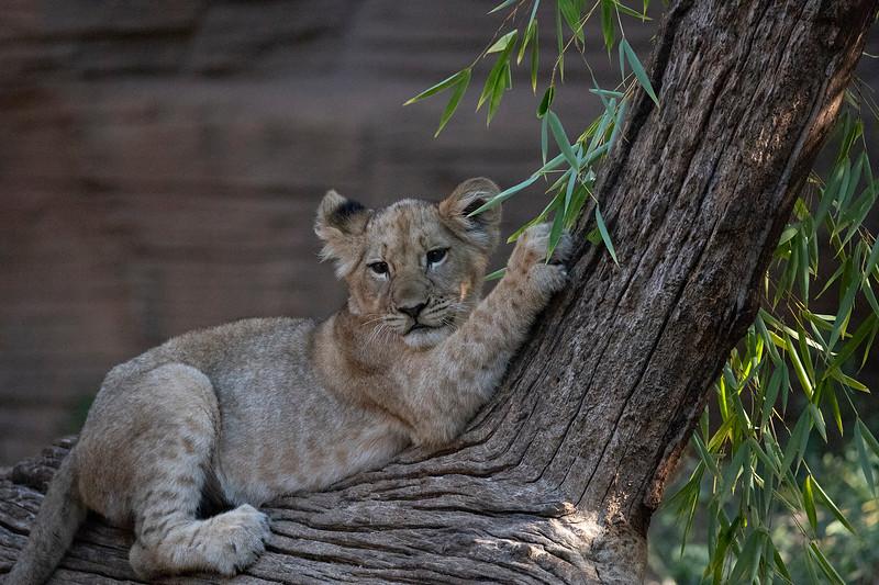 Riverbanks Zoo Sep 2018