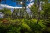 Norwegian Jungle