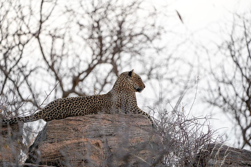 safari-2018-11.jpg