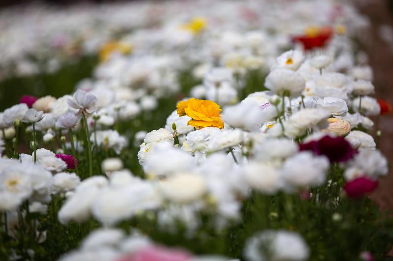 Spring Flowers B-468.jpg