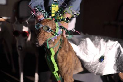 GPAEC Hound Dog Howliday, 1-3 APR 11