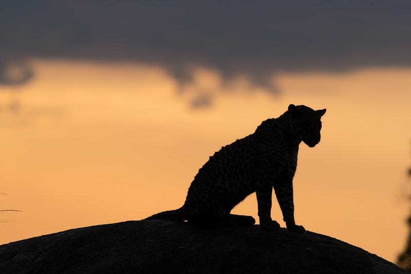 Africa  - 101016- 201-Edit.jpg