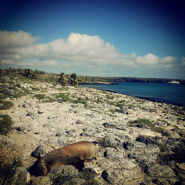 You_see_many_older_sea_lions_on_Las_Plazas_who_have_lost_their_territory_and_come_up_on_the_rocks_to_dry_in_the_sun_without_bother_from_younger_bulls..jpg