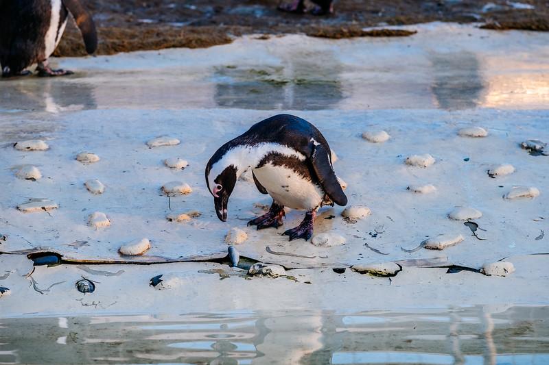 Tonis Zoo-0403.jpg