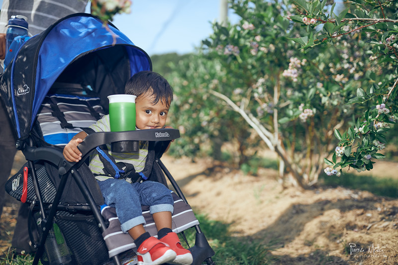 Cider Hill Farm 19.jpg