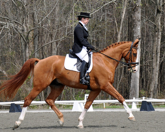 Horse Shows 2009