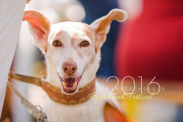 Donaueschingen Sighthound Festival 14/08/2016