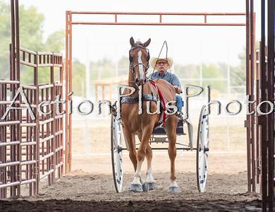 18Virden Draft Horses