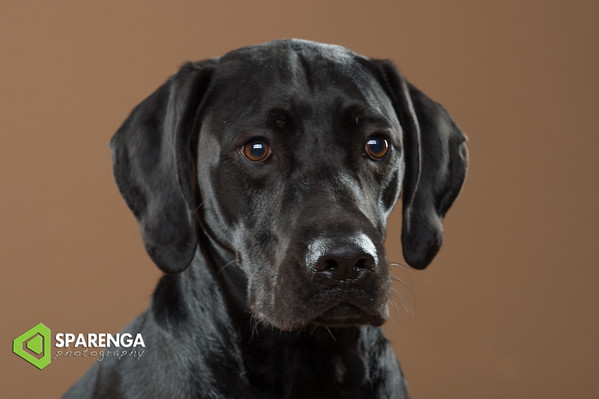 Canine Crews Class Photos 2017