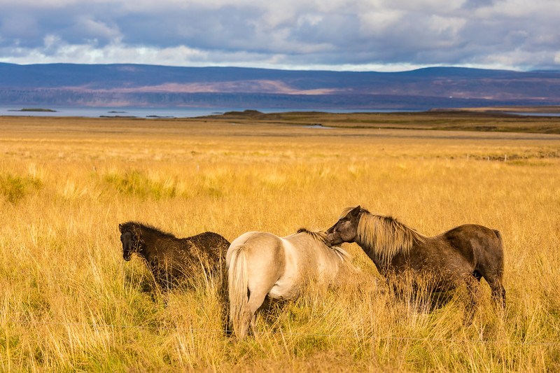 Iceland19_-3250.jpg
