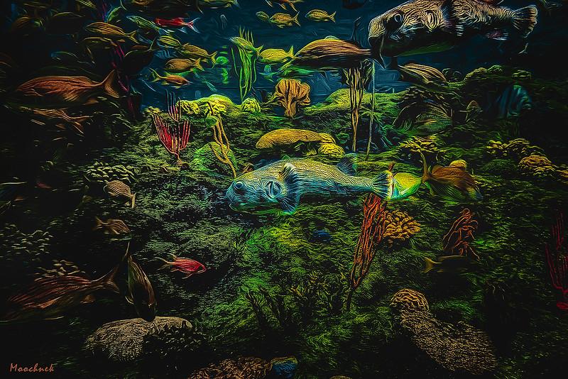 aquariumillustrative2-Edit-Edit-giga-copy-web935x1400U100.jpg