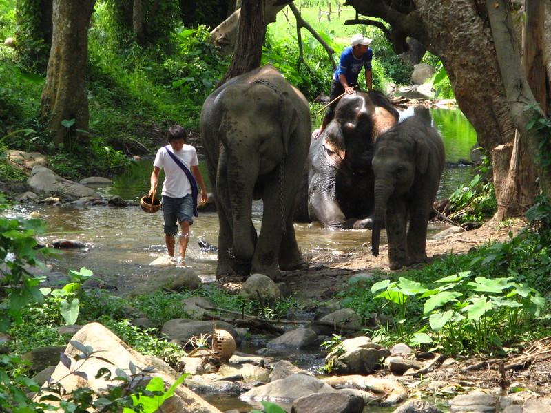 Enjoying the river at Patara Elephant Experience.