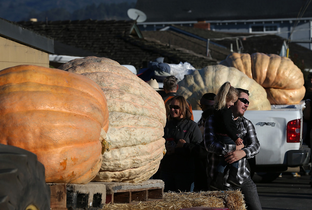 . People look at giant pumpkins during the 40th Annual Safeway World Championship Pumpkin Weigh-Off on October 14, 2013 in Half Moon Bay, California.  (Photo by Justin Sullivan/Getty Images)