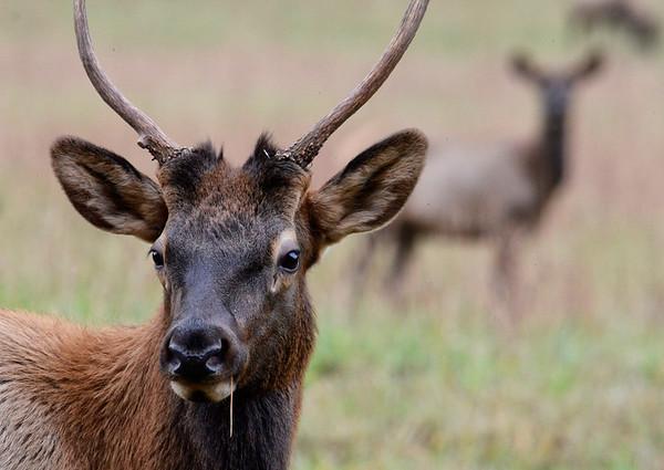 Elk-Cataloochee Valley