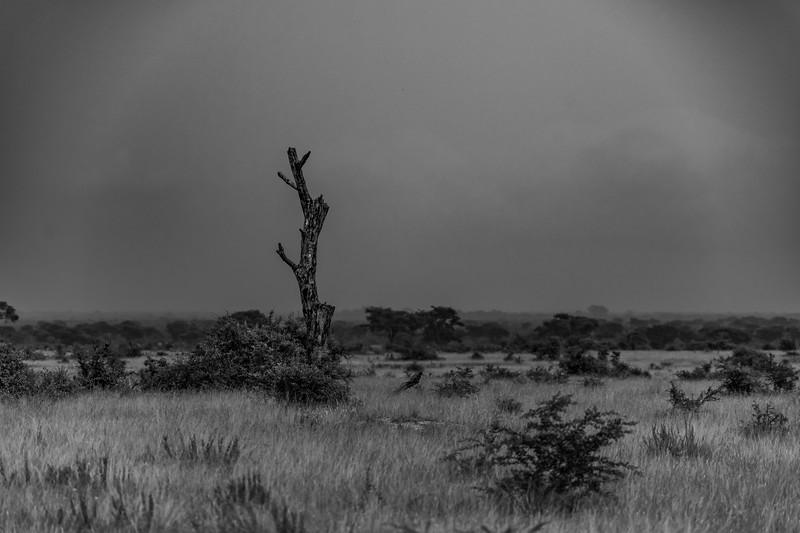 Uganda_T_QE-941.jpg