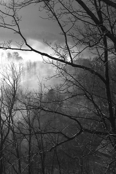 High mountain mist from High Mountain Mist.  Our cabin in the Smokies.